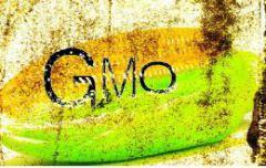 natural_society_140328_no_to_gmo_article